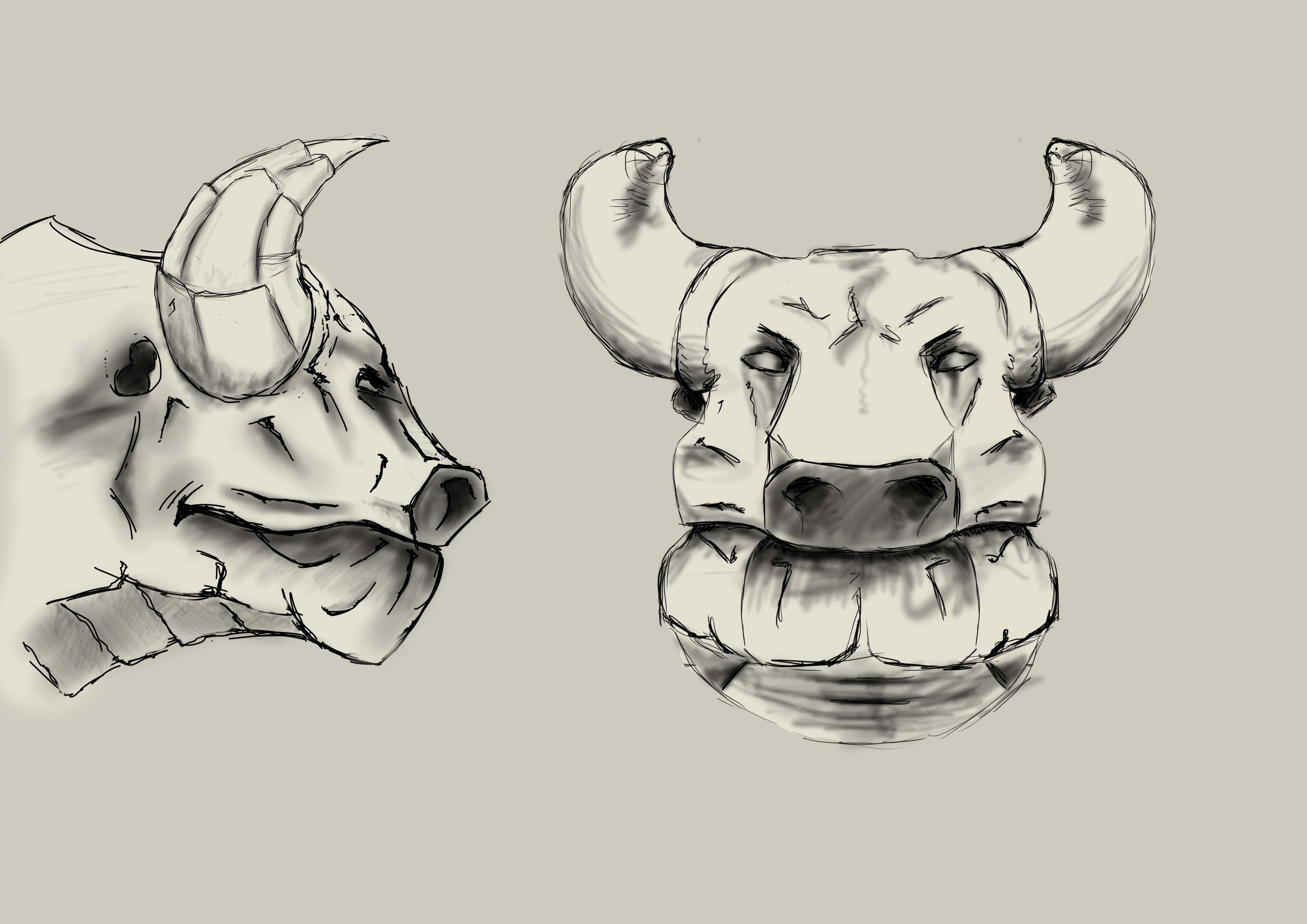 bull modelsheet